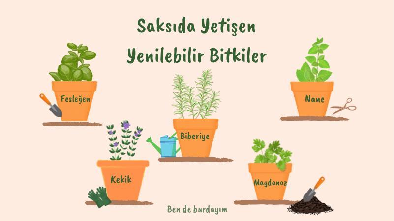Saksıda Yetişen Yenilenebilir Bitkiler